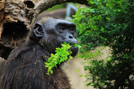 Monkey Stock Photo - 16627243