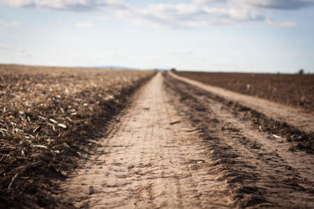Empty road leading between harvested corn fields, up to the horizon - shallow DOF photo
