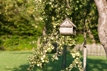 Bird tablefeeder suspended from a tree in a country orchard lit by summer sunshine photo