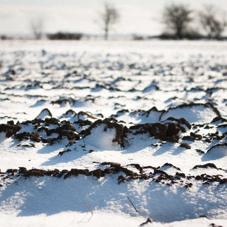 Winter background: field covered with snow (selective focus) Stock Photo - 12327158