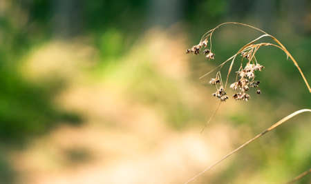 Green natural background  dry grass against lovely fresh green of the forest Stock Photo - 13317449