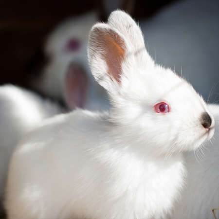 the hutch: Closeup of a baby white rabbit in a hutch