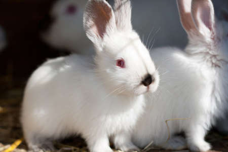 Closeup of a baby white rabbit in a hutch Stock Photo - 13422470
