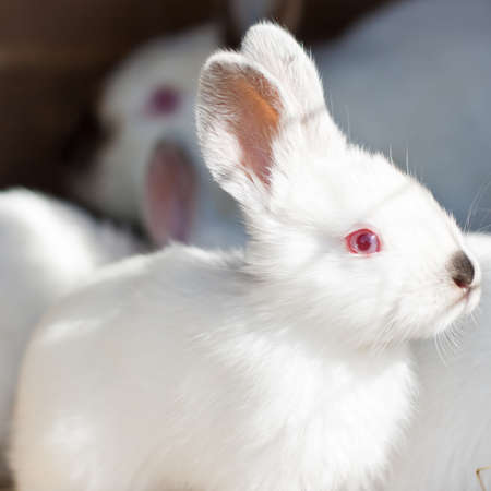 Closeup of a baby white rabbit in a hutch photo