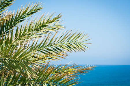 Holiday background: palm leaves against blue sky and azure sea Stock Photo - 13869854