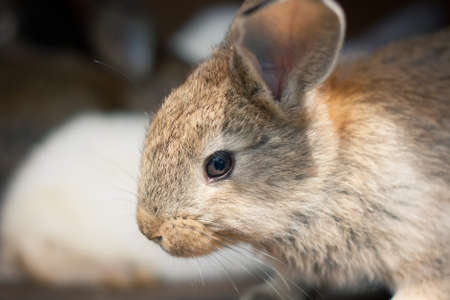 hutch: Closeup of a baby rabbit in a hutch