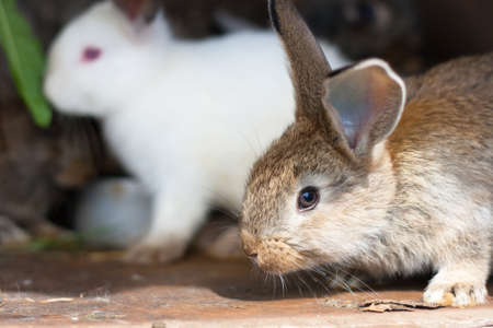 Closeup of a baby rabbit in a hutch photo