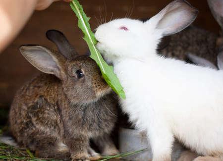 Feeding baby rabbits in a hutch