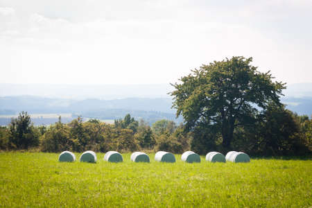 feedstock: Silaging - crop fermenting for silage on a mountain meadow Stock Photo