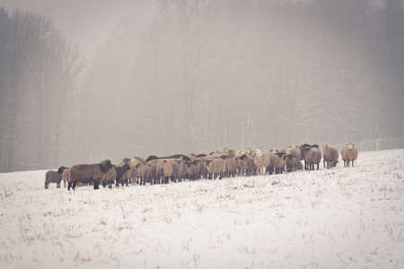 a long poem: Sheep in fog Stock Photo