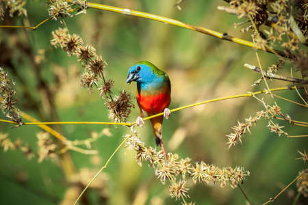 Green munia bieds in the bamboo forest  photo