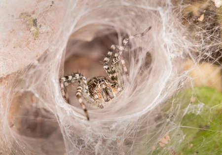 dialectic: Spider in white radiation Stock Photo