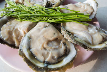 prepared shellfish: Fresh oysters from the sea Stock Photo