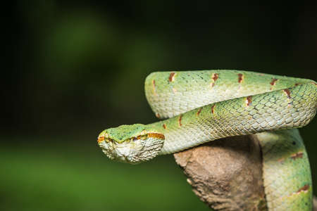 Close up green snake