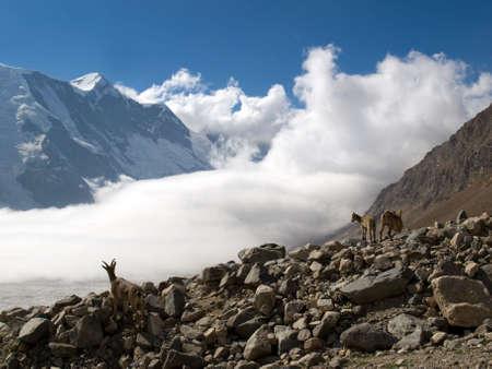 Mountains. Caucasus. Kabardino-Balkariya. Mountain goats and beautiful clouds photo