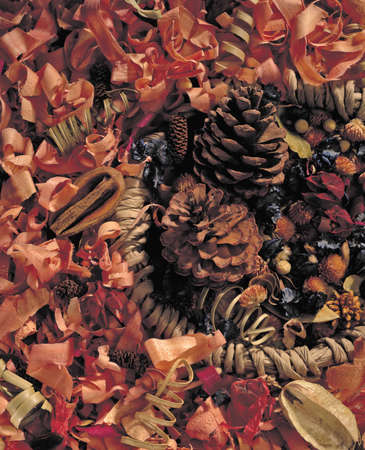 dry leaf and pine cone background