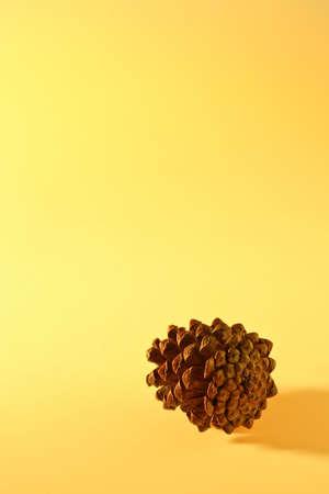pine cone in studio Stock Photo - 13164582