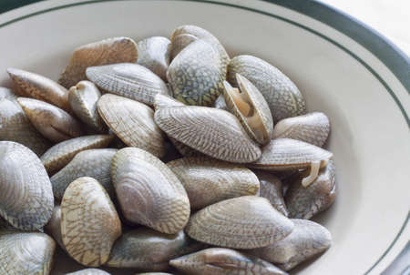 clams, seafood, used to make food such as soup or fried