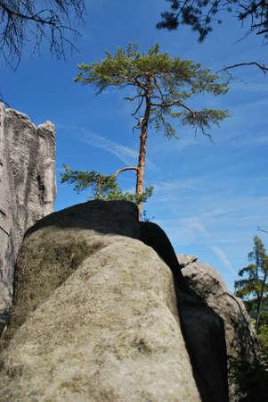 Pine tree and sand stone rocks Stock Photo - 5029880