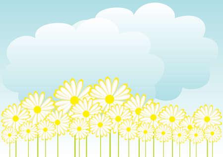 oxeye: Spring Background Stock Photo