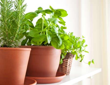Drie potten van kruiden: Rosemary, basilicum en Mint