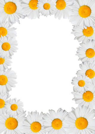 Floral Frame - Oxeye Daisies Flowers on White Background Stock Photo - 9904106