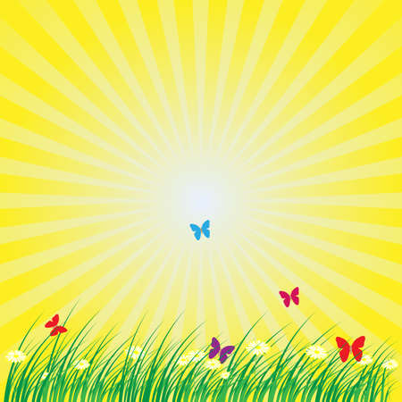 oxeye: Summer - Spring Nature Background: Grass, Butterflies, Daisy Flowers on Yellow Background