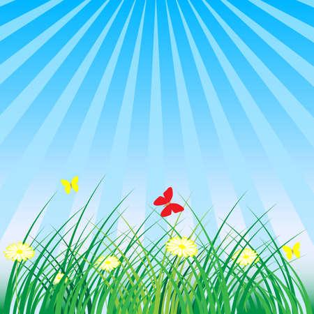 oxeye: Summer - Spring Nature Background: Grass, Butterflies, Daisy Flowers Illustration