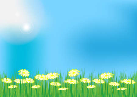 Spring  Summer Background - Meadow With Grass and Oxeye Daisy Flowers Vector