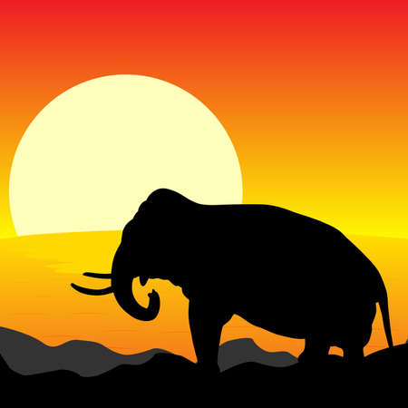 sunset lake: Africa Sunset - Silhouette of Elephant Standing in the Sunset