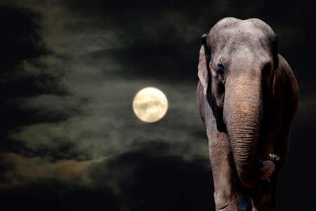 lightness: Elephant Walikng in the Night - Full Moon Stock Photo