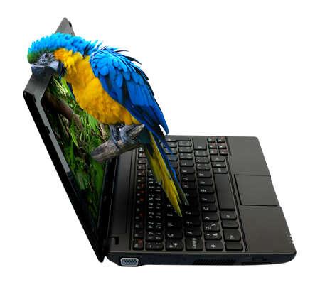 loro: Netbook 3D  portátil con loro en la pantalla - aislados en blanco