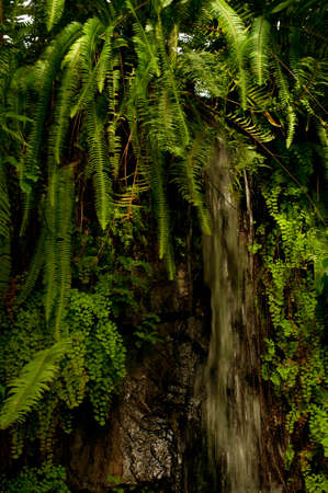 Waterfall in Dense Tropical Rain Forest With Ferns and Plants Stock Photo - 10604314