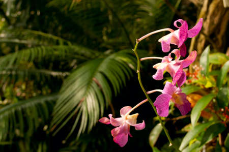 ferns and orchids: Detail of Flowers Dense Tropical Rain Forest