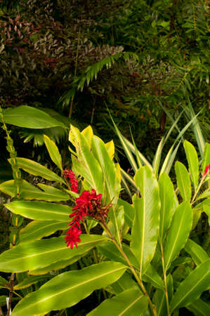 Dense Tropical Rain Forest With Flowers, Trees, Ferns and Plants photo