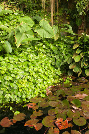 Water Hole in Dense Tropical Rain Forest Stock Photo - 10604332