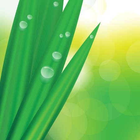 ochtend dauw: Detail van Groen gras met dauw op bokeh achtergrond