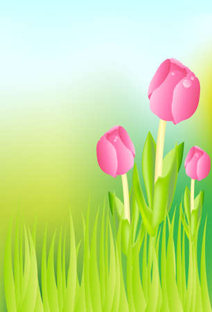 Illustration of  Pink Tulips and Grass on Meadow Vector
