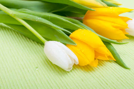 Yellow and White Tulips on Green Tablecloth Stock Photo - 12773034