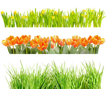 Tufts of Tulips, Narcissus and Green Grass Isolated on White photo