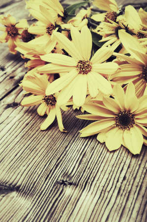 vintage look: Fiori selvatici gialli margherita su tavola di legno - look vintage Archivio Fotografico