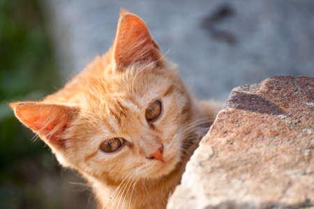 cute kittens: Cute Ginger Kitten Outdoors Stock Photo
