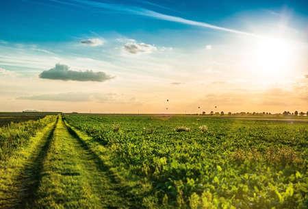 ballons: field of grass and sunset