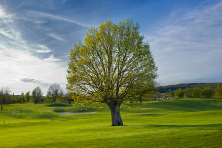 Tree on Golfcourse photo
