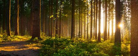 美しい明るい太陽光線 - ワンダー ラストと春のサイレント フォレスト 写真素材