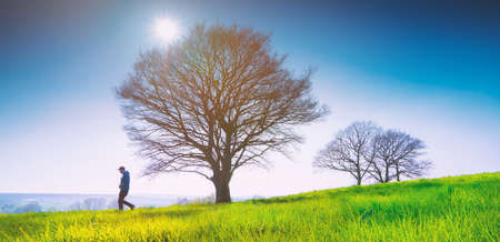 Lonely tree on a field of grass in spring with beautiful bright sun rays