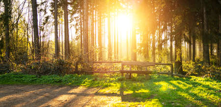 Bench in Silent Forest in spring with beautiful bright sun rays - wanderlust