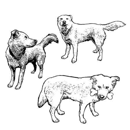 Vector set of hand drawn dogs in different action. Vintage engraved illustration with dogs isolated on white. Cute animals in sketch style