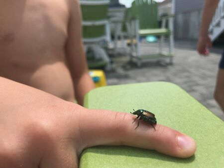 An insect is on a little boys finger in the summer time.
