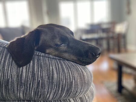 Cute dog laying on his owners legs. Imagens - 144890445